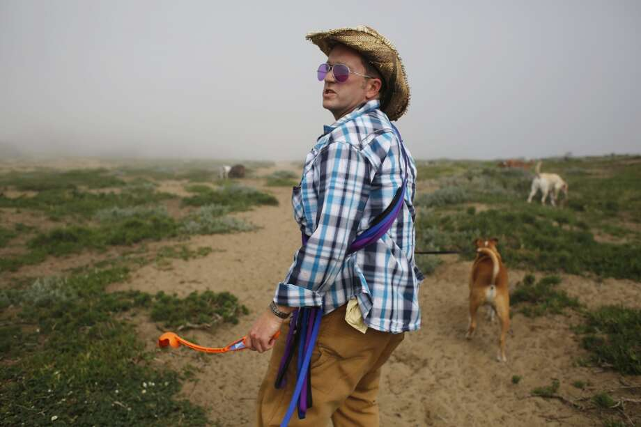 Armed with a tennis ball launcher and a bevy of leashes, Wild Bill Peacock wrangles his pack at Fort Funston at the edge of San Francisco, Calif. Photo: Mike Kepka, The Chronicle
