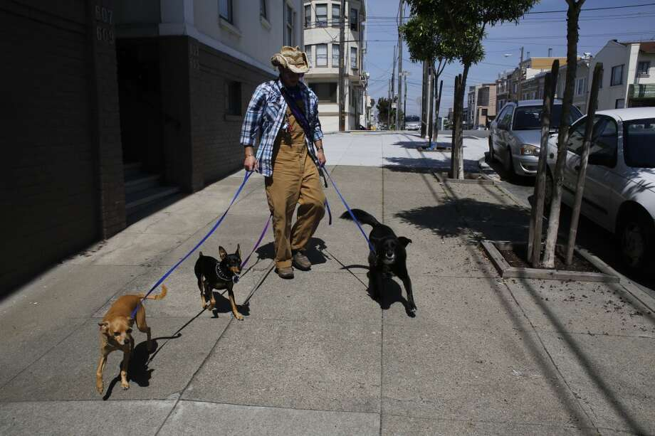 Wild Bill Peacock picks up three dogs at in San Francisco before heading to Fort Funston. Photo: Mike Kepka, The Chronicle