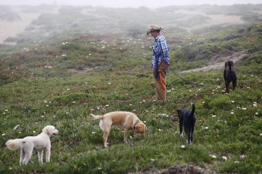 Wild Bill Peacock looks for dog dropping at Fort Funston. Photo: Mike Kepka, The Chronicle