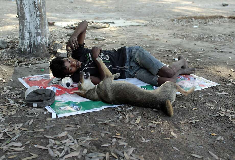 The life of Mohammad:Mohammad Anwarul plays with a stray dog inside a public park in   Dhaka, Bangladesh. Anwarul, who is homeless, makes his living by collecting trash at the   park. Photo: A.M. Ahad, Associated Press