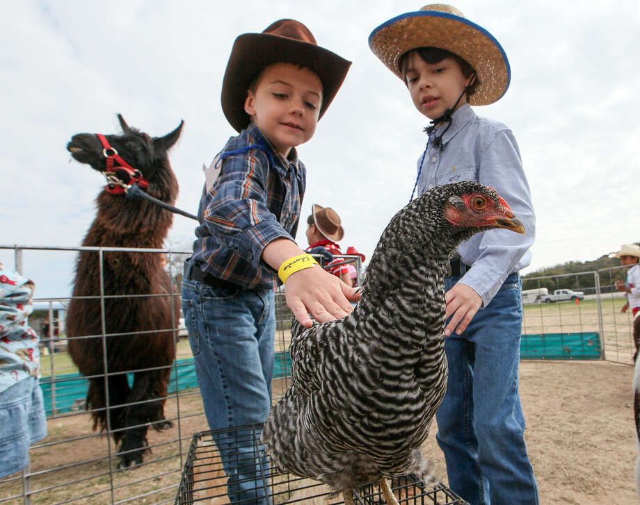 First-graders Dylan Grant (left) and John Paul Herron reach to pet a chicken in the Petting Zoo during the Helotes Rodeo Roundup at Helotes Elementary School. Photo: Marvin Pfeiffer / Helotes Weekly / EN Communities 2014