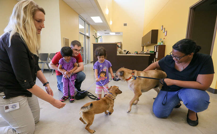 Animal Services' Shanna Roman, left, watches as Tim and Shamard Griffin, with daughters Athena, 2, and Lydia, 1, see if Hera, a dog at the facility, makes friends with their dog, Odin. / Express-News 2014