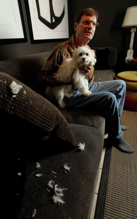 David Weede holds his dog, Chloe, in the living room of his home, Monday, April 14, 2014, in Houston. Holes in the cushions of his couch bleed feathers, where rats, from a hoarding neighbor, came into his home and caused damage.  For nearly eight years, Weede called city officials looking for someone to help clean-up his neighborâÄôs townhome, where hundreds of birds, dogs and cats darted down feces-caked goat paths between piles of wholesale goods and rotting food. Finally, about a year ago, an animal abuse intervention helped get authorities into the home and gave them leverage to convince the homeowner to clean up. ( Karen Warren / Houston Chronicle  ) Photo: Karen Warren, Staff / © 2014 Houston Chronicle