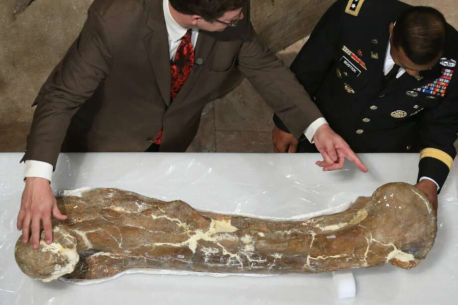 The leg bone's connected to the ... Smithsonian National Museum of Natural History Director Kirk Johnson and U.S. Army Corps of Engineers Lt. Gen. Thomas Bostick look closely at the fossilized right femur of a 65-million-year-old Tyrannosaurus rex in Washington, D.C. Formerly known as the Wankel T. rex, the nearly complete dinosaur fossil was discovered in 1988 in eastern Montana and will be the centerpiece of the museum's new fossil hall. Photo: Chip Somodevilla, Getty Images