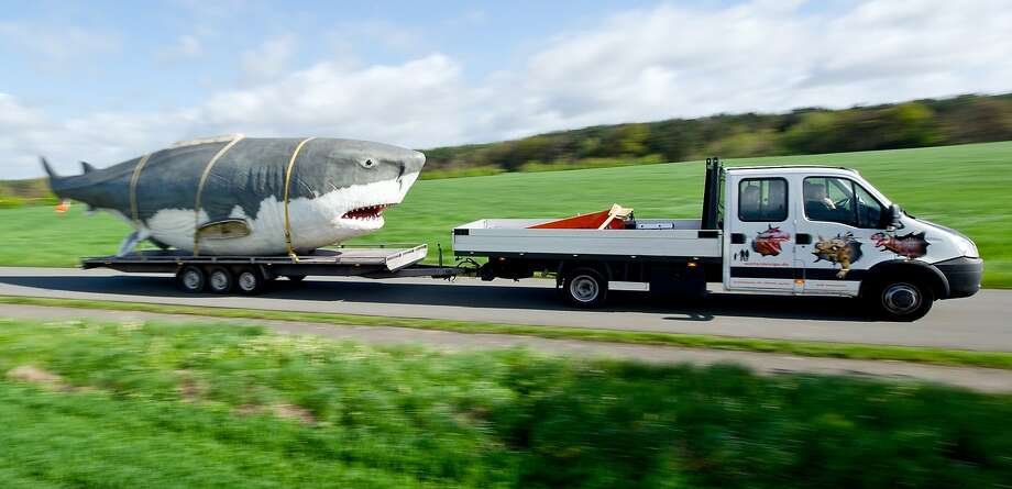 Faster! It's gaining on us!A life-size Megalodon, an extinct species of shark, follows behind a flatbed truck to a dinosaur park in Muenchehagen, Germany. Photo: Christoph Schmidt, AFP/Getty Images