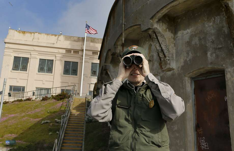 Biologist Tori Seher searches for the northern gannet, which was spotted on Alcatraz Island yesterday. Photo: Michael Macor, The Chronicle