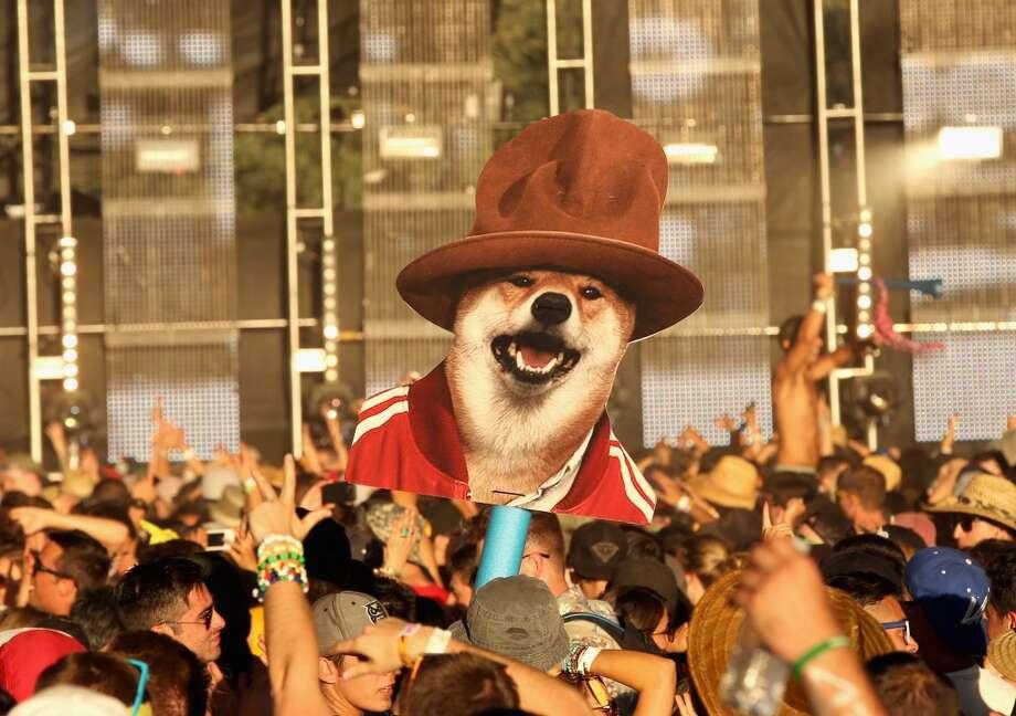 Creepy dog head in a Pharrell hat. Photo: Mark Davis