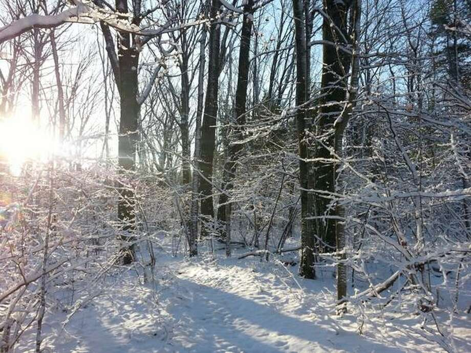 Sun shines through bare trees in a snow covered forest Wednesday morning in Niskayuna. (Teresa Buckley / Times Union)