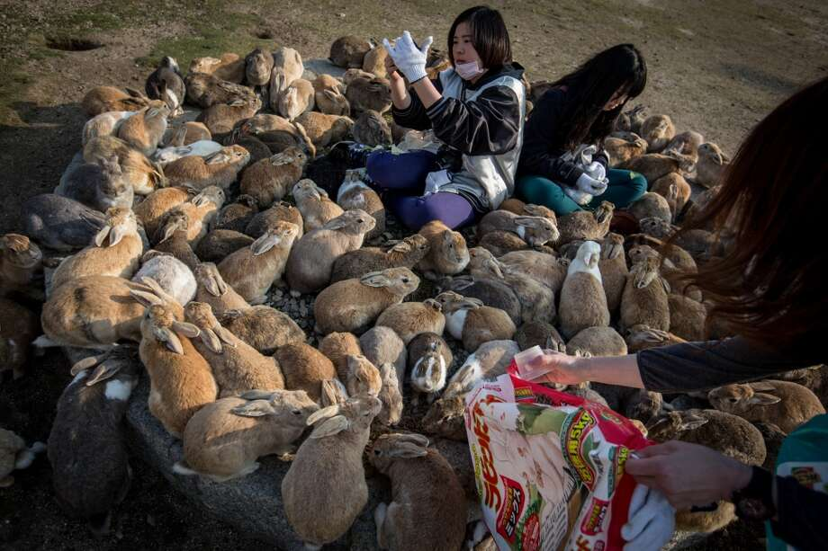 "Happiness fact #1: ""There's an island called Okunoshima in Japan filled with tame bunnies.""Rabbit Island once had a much darker history. The Japanese produced poisonous gases there during World War II.Source: The Guardian Photo: Chris McGrath, Getty Images"