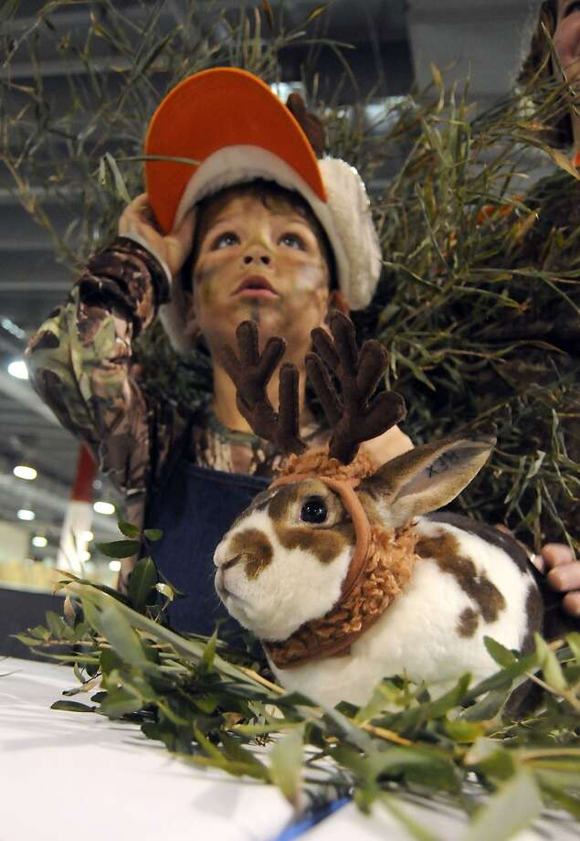 Kaiden Warren and his rabbit Rex await judging at the rabbit and cavy costume contest at the Houston LIvestock Show and Rodeo Saturday  March 15, 2014. Warren won 3rd place.(Dave Rossman photo) Photo: Dave Rossman, For The Houston Chronicle