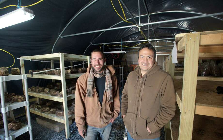 Pat Padraic, 27, of Beacon, New York,, left, and his business partner, Ervin Raboy, 32, of Brewster, N.Y., have started a mushroom farm called Mogu Mushrooms, on Raboy's family farm, Pleasant View Farm, in Brewster, New York. They are standing in the greenhouse where they are presently growing Shiitake mushrooms while they work on a larger facility. Photo: H John Voorhees III / The News-Times Freelance