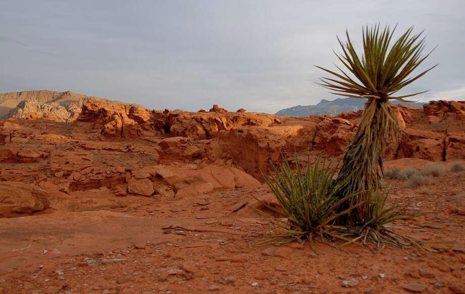 Hidden Nevada -- Gold Butte Photo: Matthew B. Brown