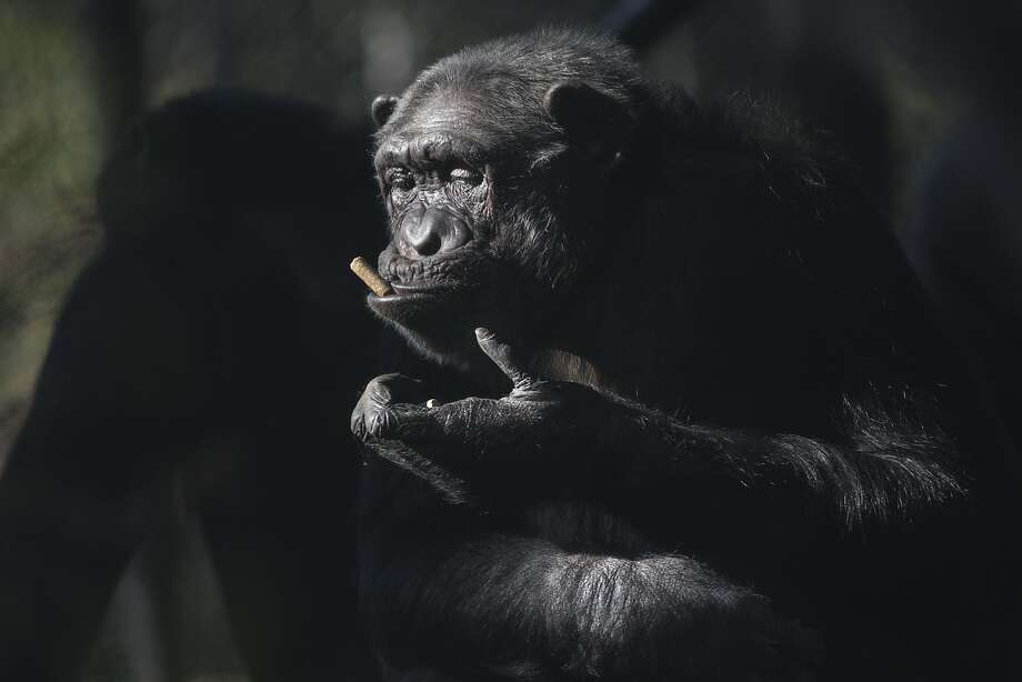 It's hard to quit when it makes you look this suave and debonair: We're told 