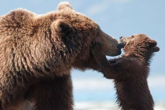 Disneynature's BEARS  Character: Sky & Scout