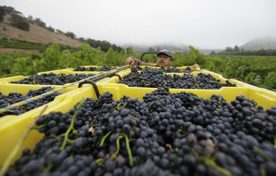 Grapes: Up 21% Photo: Eric Risberg, Associated Press
