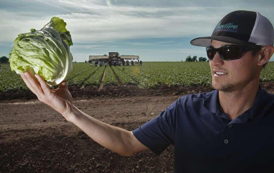 Lettuce: Up 34% Photo: Don Bartletti, McClatchy-Tribune News Service