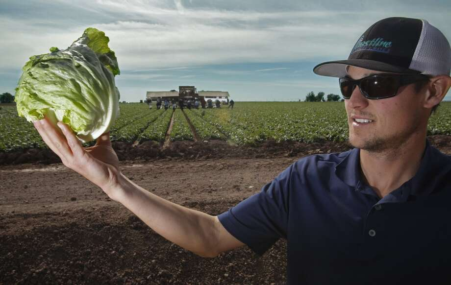 Lettuce: Up 34% Photo: Don Bartletti, McClatchy-Tribune News Service