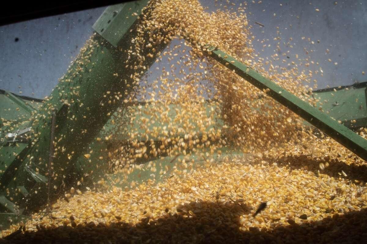 Corn: Up 14.3%