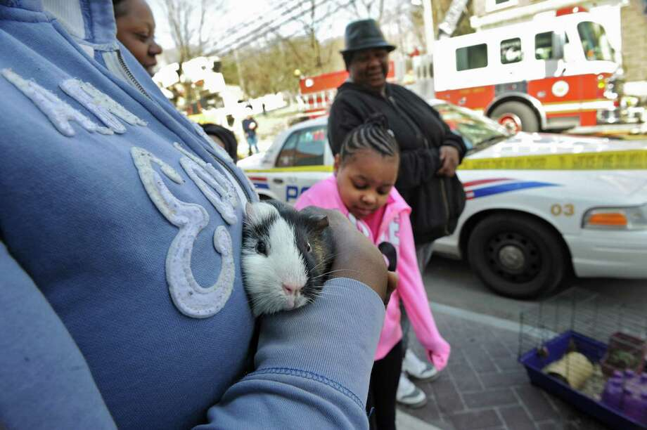 Lakesha Hilts holds her pet guinea pig called Gabby which firefighters rescued from her burning home on 4th Street Thursday, April 17, 2014 in Troy, N.Y. (Lori Van Buren / Times Union) Photo: Lori Van Buren / 00026549A