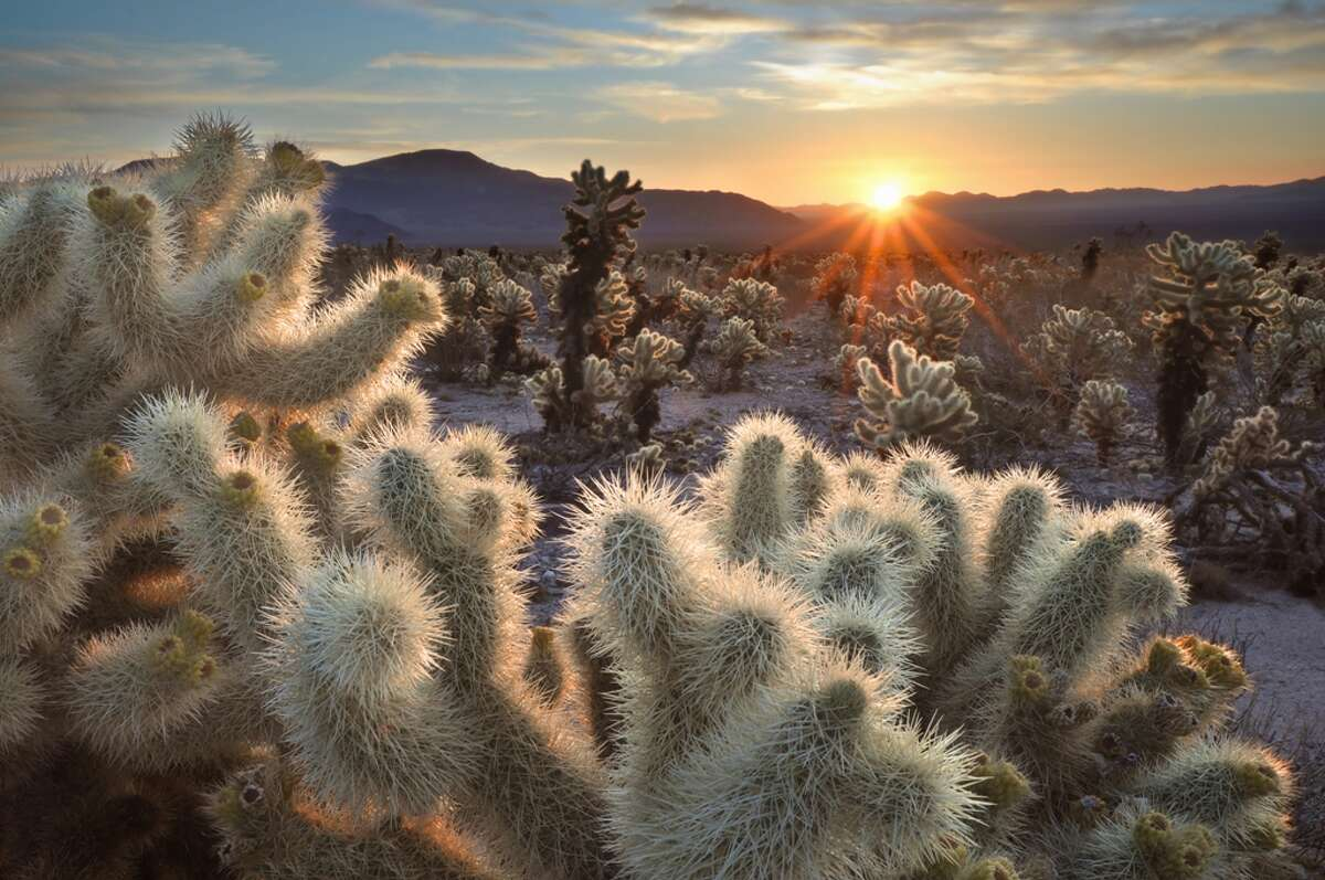 April 15, 16 - National Parks WeekendFind out more at National Parks Service Pictured: Joshua Tree National Park