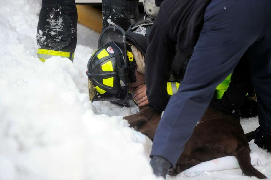 Greenwich Station One Central firefighter Jason James performs CPR on a dog they pulled from a structure fire at 295 Palmer Circle Thursday afternoon February 11, 2010. Photo: Keelin Daly / Greenwich Time