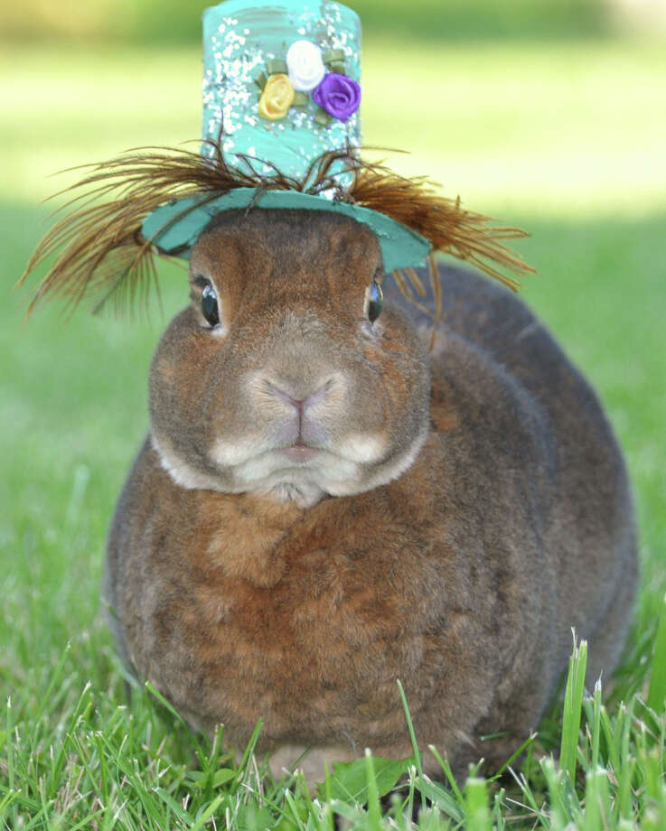 """Do I have to wear the hat? I mean, I already have to hide the eggs. That's a little silly already. This hat, though, is downright ridiculous. Can I talk to wardrobe?"" Photo: Jennifer Shields/jjs08 Images, Getty Images / Flickr RF"