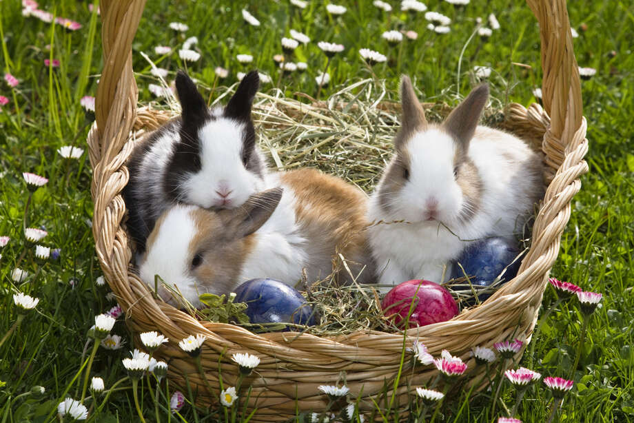 These little guys are confused because last time they checked, it was Easter bunnY, not bunnIES. Photo: Konrad Wothe, Getty Images / LOOK