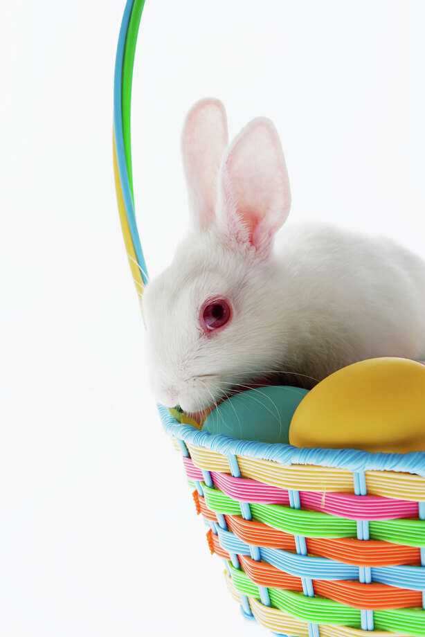 Brilliant idea: Put a bunny in a basket made of straw, knowing bunnies like to eat straw. We have a good idea what happens next. Photo: Image Source, Getty Images / (c) Image Source