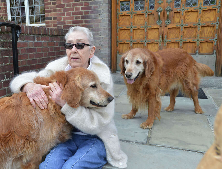 Margaret Casey, 86, of Greenwich, with golden retrievers, Clancy, left, and Chase at St. Mary Church in Greenwich, Conn., Friday, April 18, 2014. Casey who works at the church is looking for a person or family to adopt the dogs (as a pair) that belong to the Rev. Monsignor Frank Wissel who use to live with the dogs at the parish but is now a resident at Nathaniel Witherell where pets are not allowed. The Rev. Monsignor Wissel will be officially retiring in mid-June. Photo: Bob Luckey / Greenwich Time