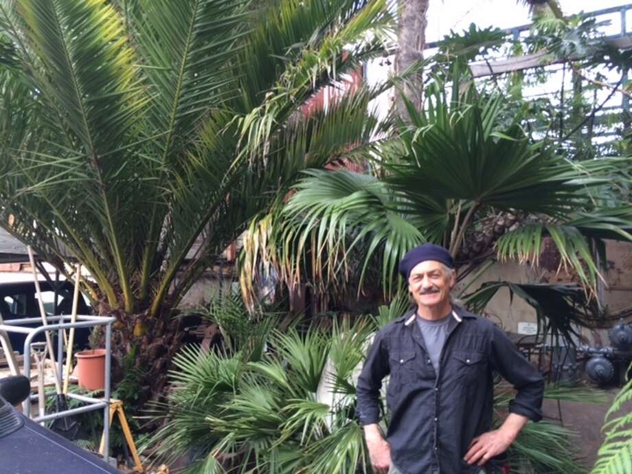 Filmmaker Benjy Young in front of the palm garden he planted at Florida and 17th Streets 30 years ago. The Chronicle/Sam Whiting
