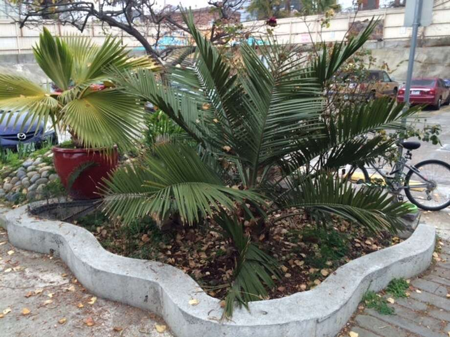 Another palm grotto in the parking lot at Project Artaud. The Chronicle/Sam Whiting