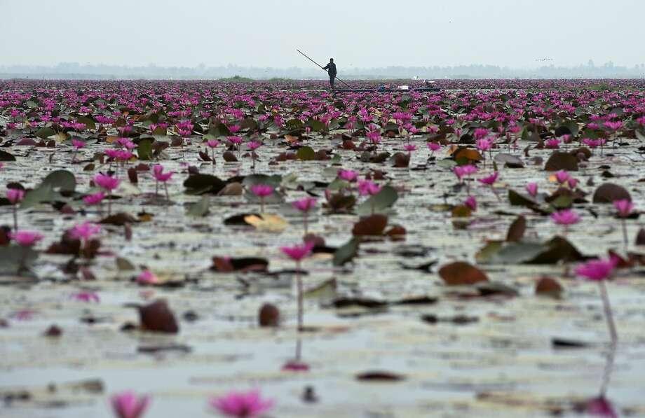 TOPSHOTS A Thai villager paddles boat as he fishing at lake in Udon Thani province on April 4, 2014. AFP PHOTO/PORNCHAI KITTIWONGSAKULPORNCHAI KITTIWONGSAKUL/AFP/Getty Images Photo: Pornchai Kittiwongsakul, AFP/Getty Images
