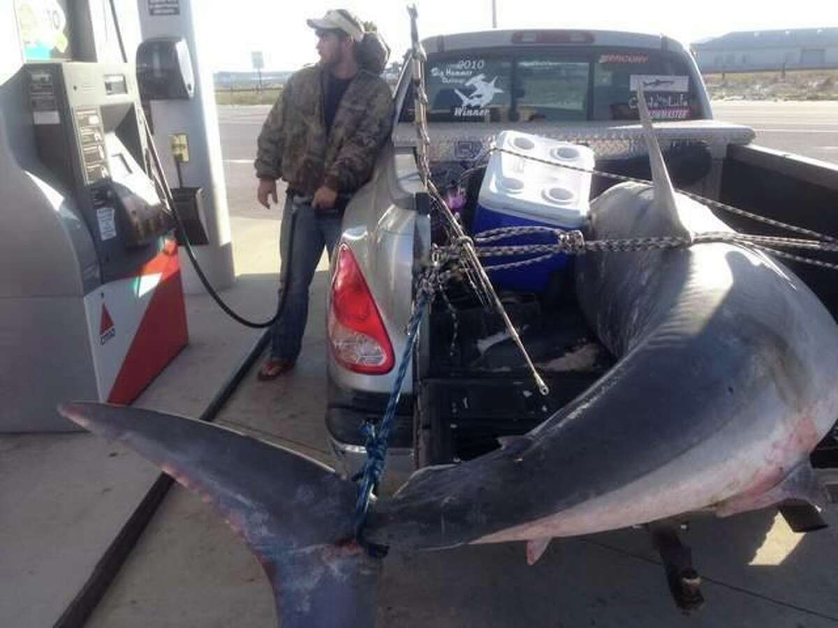 Massive Mako This crew had intended to keep their catch of an 805 pound mako shark in April under wraps but the scene at this gas station as they drove home was a bit of a give away. The huge shark put the Gulf fishermen who caught it off Florida in line for a record but alas they did not receive one.