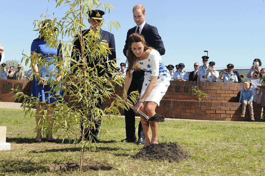 Catherine, Duchess of Cambridge, watched by Prince William, Duke of Cambridge, plants a Plunkett Mallee tree at the Memorial Garden during a visit to the Royal Australian Airforce Base at Amberley on April 19, 2014 in Brisbane, Australia. The Duke and Duchess of Cambridge are on a three-week tour of Australia and New Zealand, the first official trip overseas with their son, Prince George of Cambridge. Photo: Pool, Getty Images