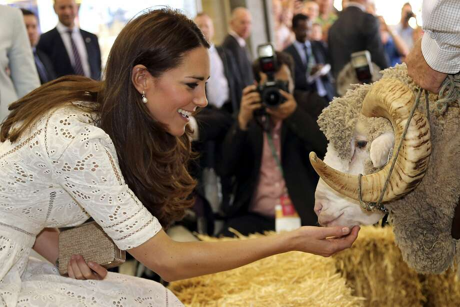 Britain's Kate, Duchess of Cambridge, pats Fred the Merino Ram during a visit to the Royal Easter Show in Sydney, Australia, Friday, April 18, 2014. Prince William and his wife, Kate, have enjoyed a sheep-shearing demonstration and greeted crowds of flower-bearing fans at an agricultural fair in Sydney. Photo: Rob Griffith, Associated Press