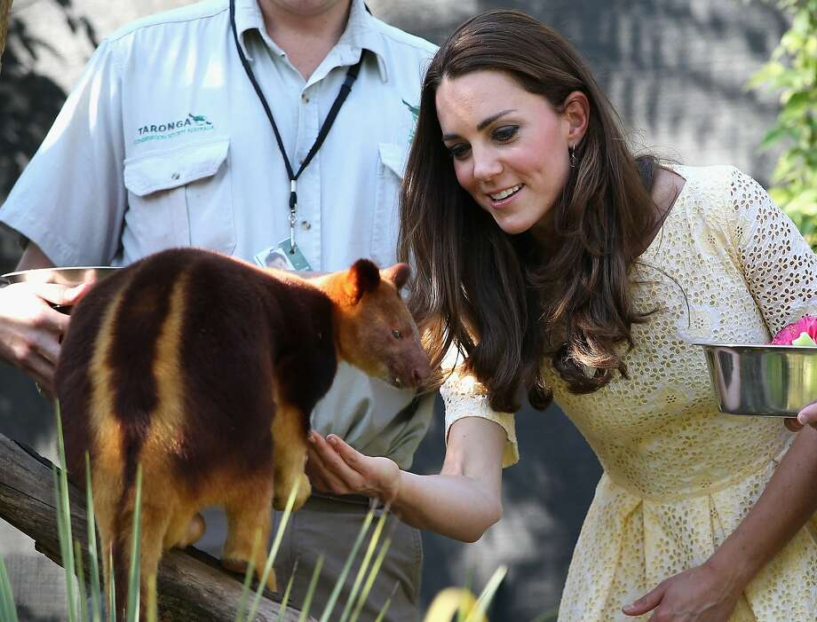 Catherine, Duchess of Cambridge and Prince William, Duke of Cambridge feed a tree kangaroo at Taronga Zoo on April 20, 2014 in Sydney, Australia. The Duke and Duchess of Cambridge are on a three-week tour of Australia and New Zealand, the first official trip overseas with their son, Prince George of Cambridge. Photo: Chris Jackson, Getty Images