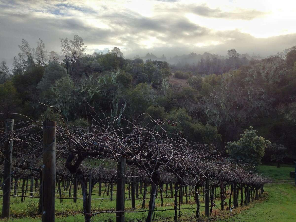 Wattle Creek Winery in Cloverdale has a tasting room that's open to visitors by appointment. Guests will also see wattles on the property - acacia trees with blossoms -- that are a tribute to the Williams family's Australian roots.