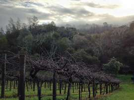 Wattle Creek Winery in Cloverdale has a tasting room that's open to visitors by appointment. Guests will also see wattles on the property — acacia trees with blossoms -- that are a tribute to the Williams family's Australian roots.