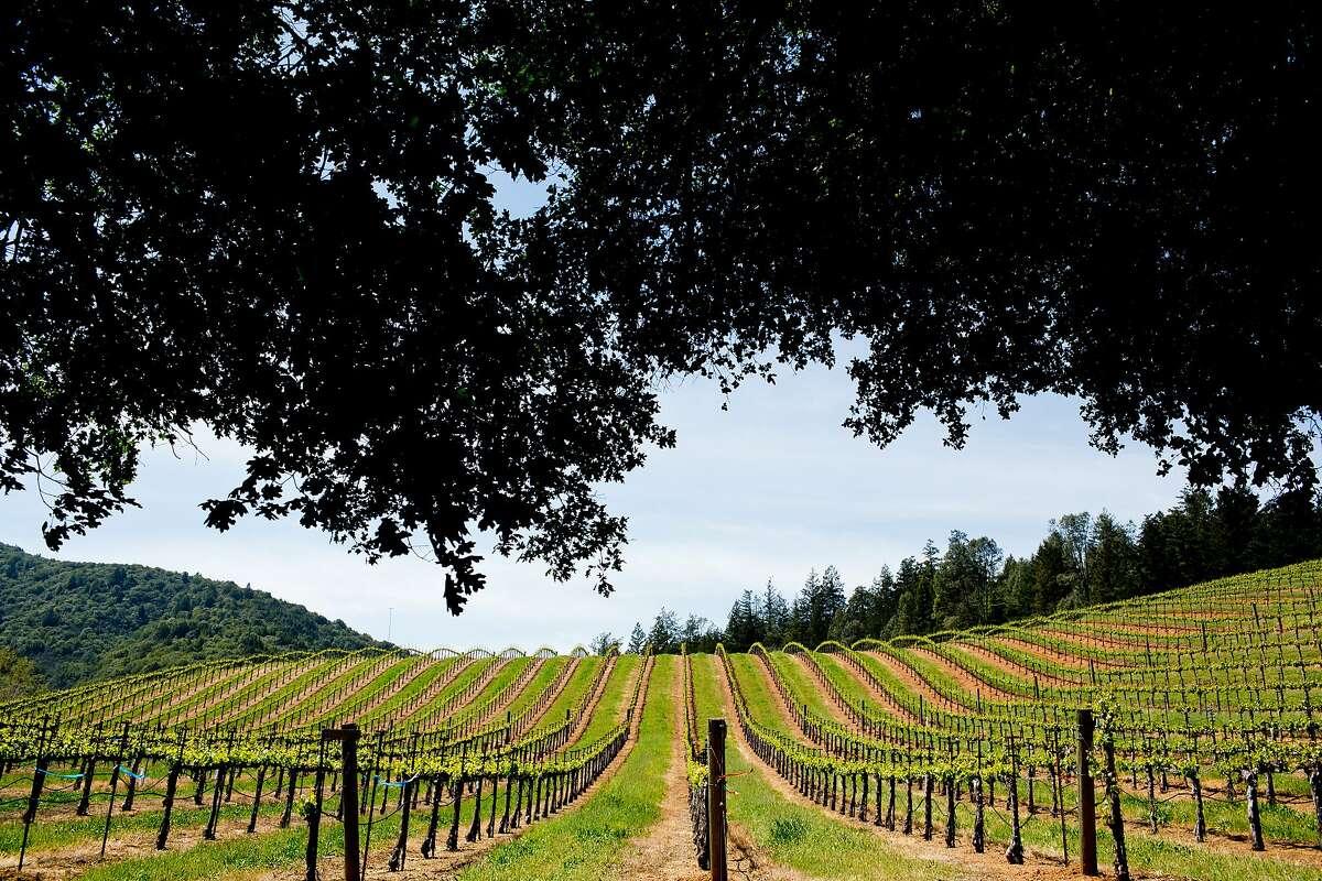 Vineyards of Dry Creek Valley near Healdsburg, Calif., Monday, April 14, 2014.
