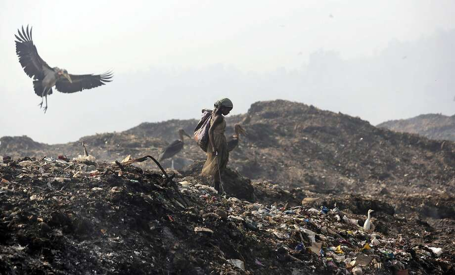 A Greater Adjutant Stork flies by a ragpicker looking for recyclable items at a garbage dump on Earth Day, on the outskirts of Gauhati, India, Tuesday, April 22, 2014. People across the globe hold events to celebrate the Earth's environment and spread awareness on how to conserve its natural resources on Earth Day, observed annually on April 22. (AP Photo/Anupam Nath) Photo: Anupam Nath, Associated Press