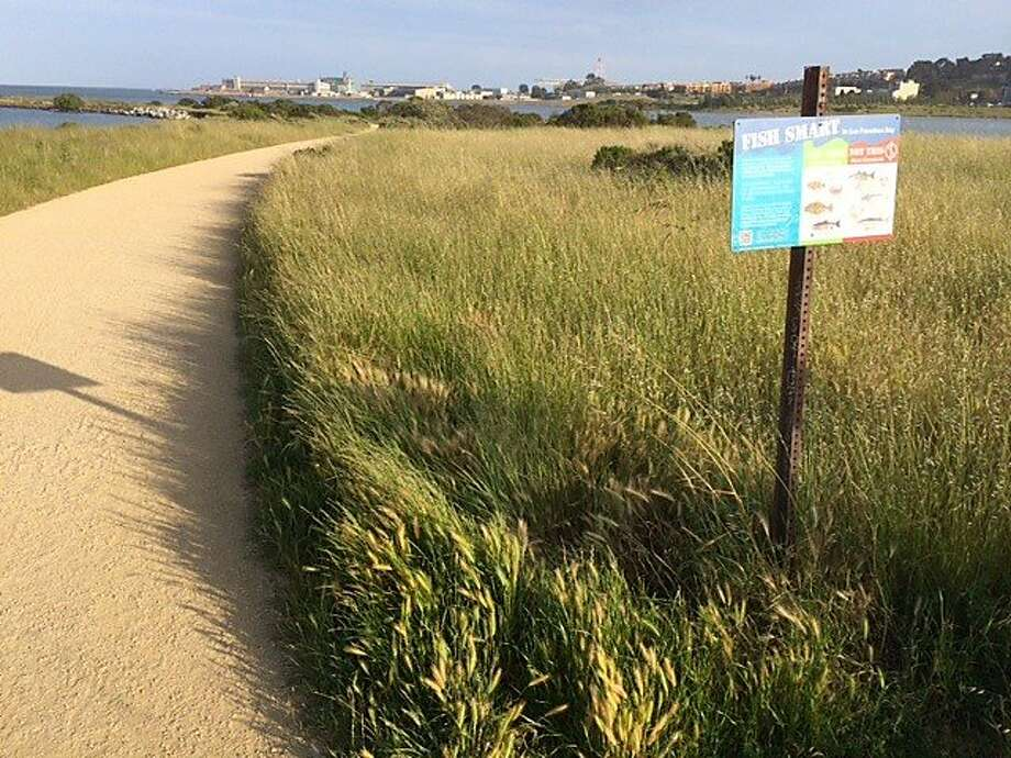 Heron's Head Park, in the southeast part of San Francisco, is a bucolic spread of grassland, wetland and trails. It's been experiencing an increase in rats this spring, and experts blame that on the drought. Photo: By Kevin Fagan, San Francisco Chronicle Reporter