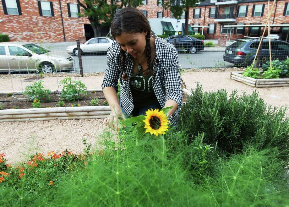 Horticulturalist Heather Ginsberg tends to plants in the therapy garden at the Eating Disorder Center at San Antonio (EDCASA) clinic. EDCASA officials started the garden in 2010 to be a part of a client's therapy. The garden has been proven effective according to the clinic's officials. Photo: Kin Man Hui, San Antonio Express-News / ©2014 San Antonio Express-News