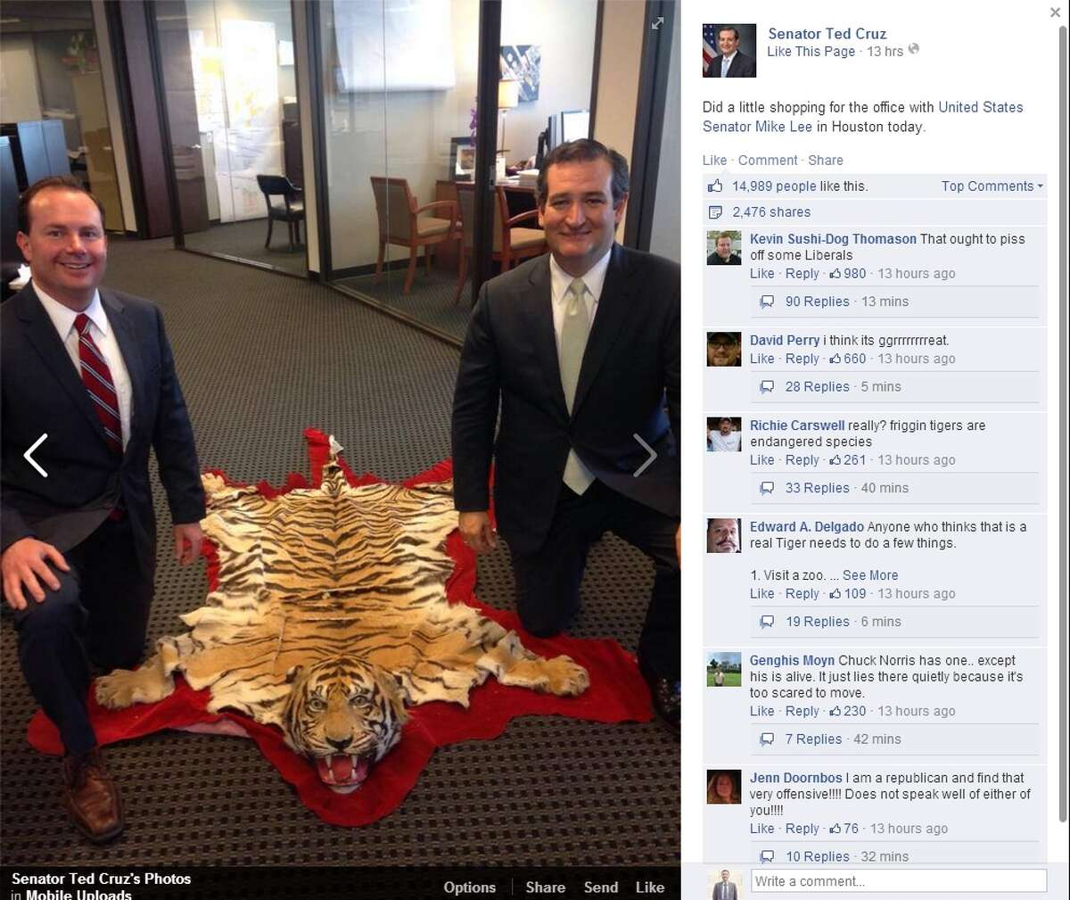 U.S. Sen. Ted Cruz caused a stir with a photo posted of him next to a rug that appears to be made of a tiger's pelt.
