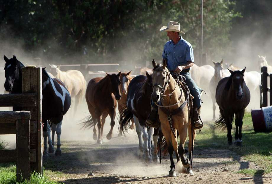 Roley Schoonover moves the horses down to a lower pasture for the evening at the Western Pleasure Guest Ranch outside of Sandpoint, Idaho. Photo: Joe Jaszewski, AP / Idaho Statesman