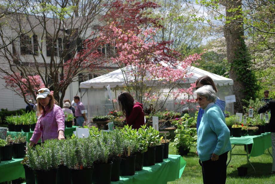 The Dogwood Festival in Greenfield Hill includes a plant and garden boutique. Photo: Contributed Photo / Connecticut Post Contributed
