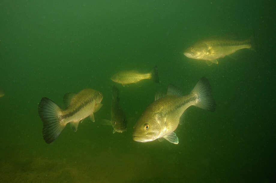 Recently stocked fishing holes