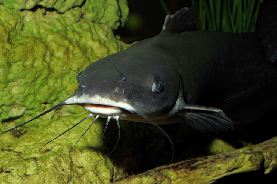 Break out the rod and reel: Catfish being stocked in Texas urban lakes
