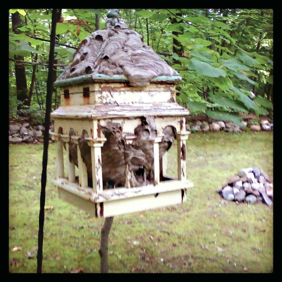 Bee's nest inside a decorative bird feeder (Courtesy Thomas Pest Control)