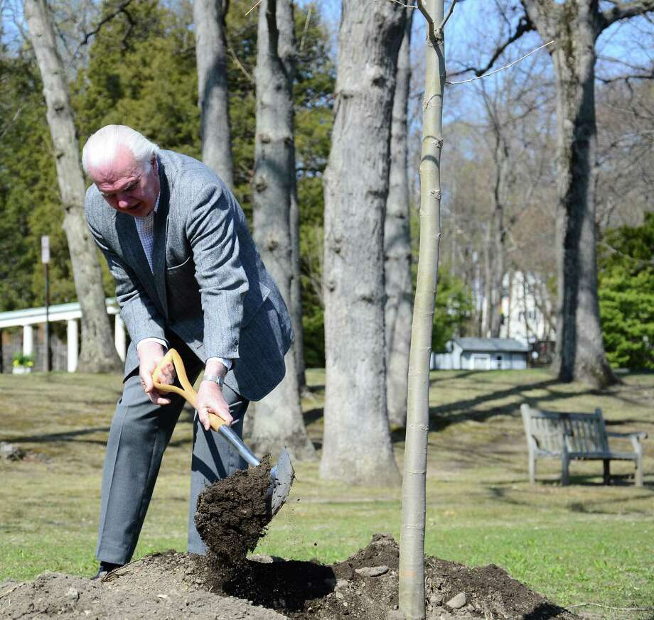 Public Tree Board member Dick Bergmann helps fill the hole where a sycamore tree, in honor of town resident and avid gardener Richard Reifers, was planted Friday morning, April 25, 2014, in Mead Memorial Park in New Canaan, Conn. Photo: Nelson Oliveira / New Canaan News