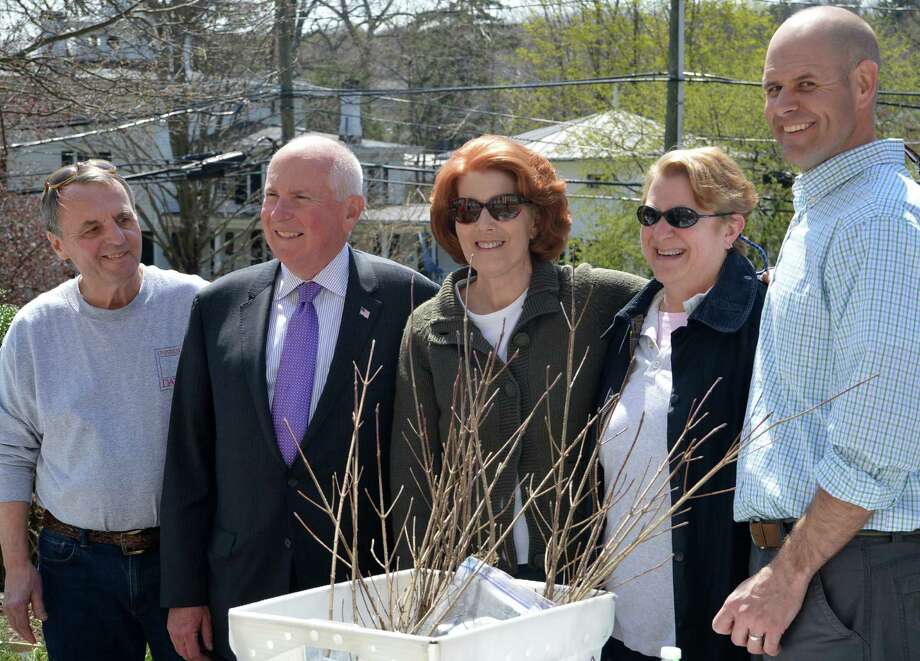Celebrating Arbor Day at Town Hall on Friday are, from left, Ed Picard, vice chairman of the Tree Board; First Selectman Jim Marpe; Susan LeDonne, the Tree Board chairwoman; Peggy Sawyer, secretary of the Tree Board, and Tree Warden Bruce Lindsay. Photo: Jarret Liotta / Westport News